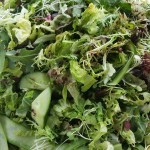 Mixed Spring Green Leaf Salad